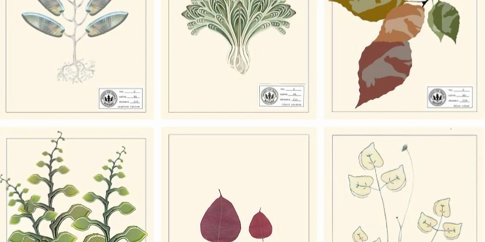 Exhibit:  Parallel Botany extended until end of February