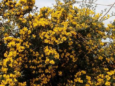 yellow flowers.jpg