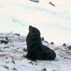 LONE SEAL HMI.jpg