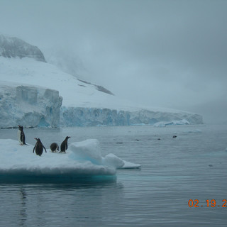 Penguins on an Ice Floe