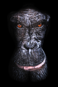 gorillaDark.jpg