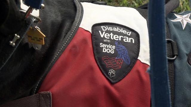 vet service dog halter.jpg