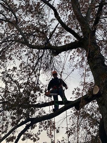 Nick Tree Climber.jpg