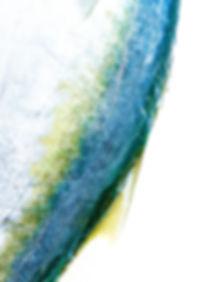 fish skin_edited.jpg