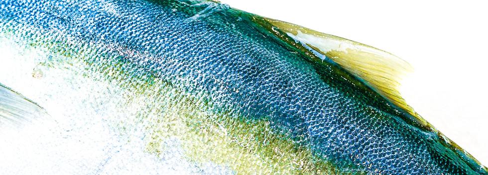 fish skin.jpg