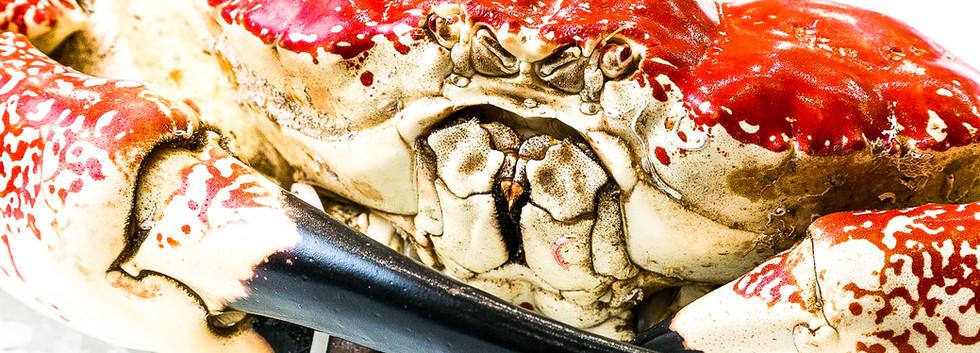 crab eyes.jpg