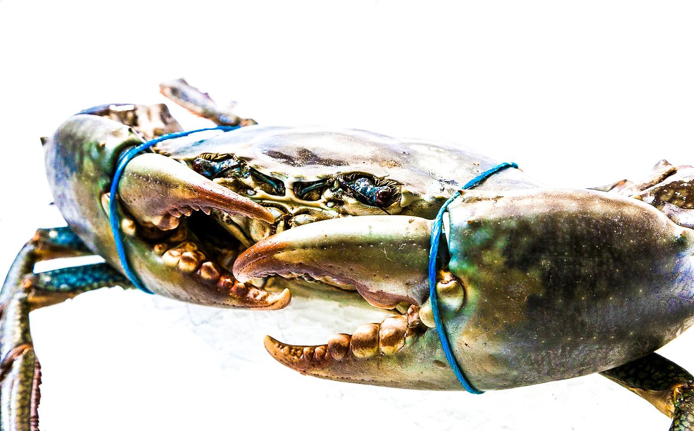 crab extra close up.jpg