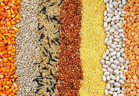 Levantamento de grãos confirma produção acima de 250 milhões de toneladas na safra 2019/2020