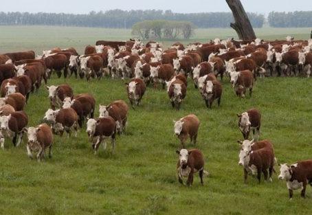 Farsul realiza levantamento sobre consumo mundial de carne