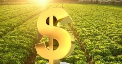Confederação da Agricultura pede ao governo ajustes no Plano Safra