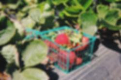Kurv av jordbær