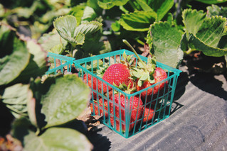 Garden Club: How to Grow Your Own Strawberries
