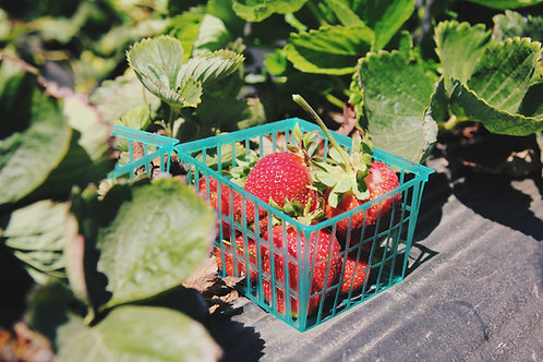 Клубника, свежая ягода