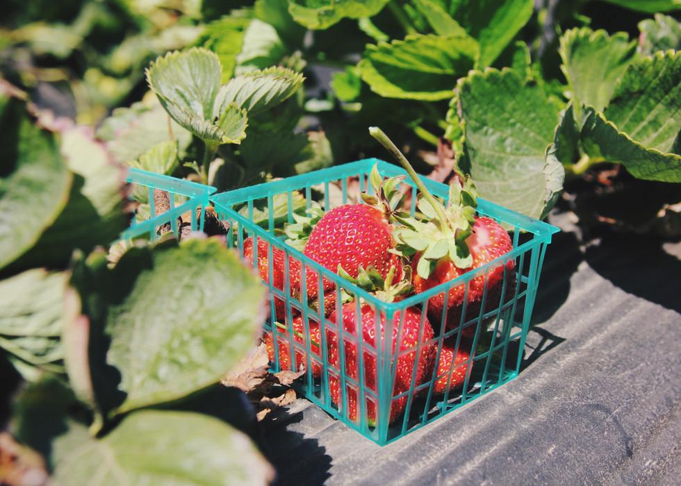 イチゴのバスケット