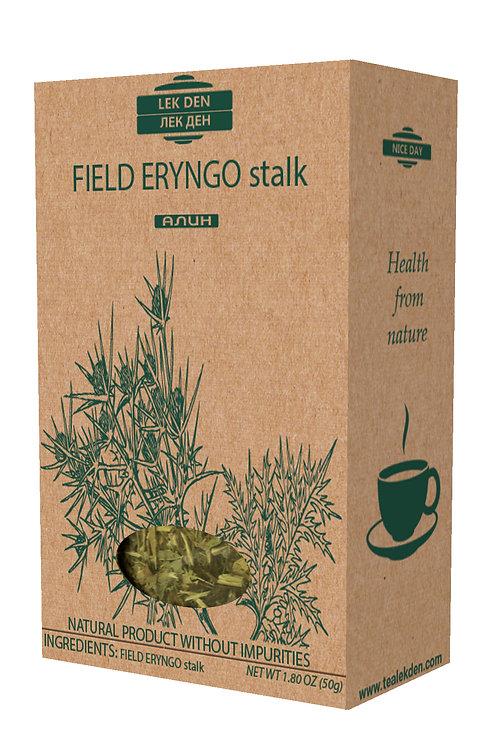 Field Eryngo stalk