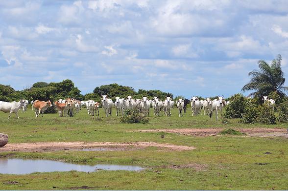 La Palmita Ganaderia y Conservacion.png