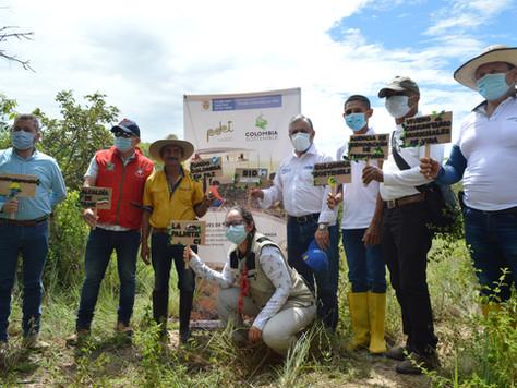 Bosques de vida, sembrando paz. El proceso de conservación comunitaria más grande de Latinoamérica