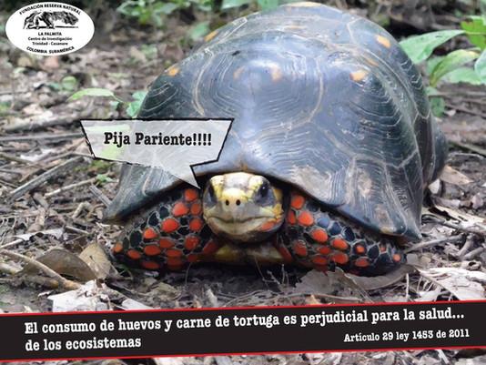 SEMANA DE PASIÓN PARA LA FAUNA Y FLORA DE COLOMBIA