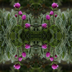 Bloomscope.jpg
