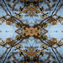 Blossomscope.jpg
