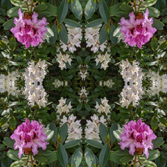 Flowerscope.jpg