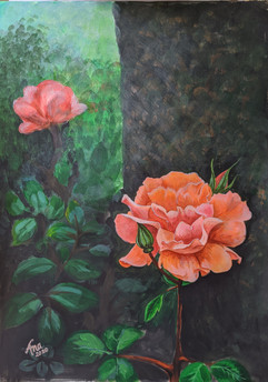 Orange Rose of Brockwell Park.jpg