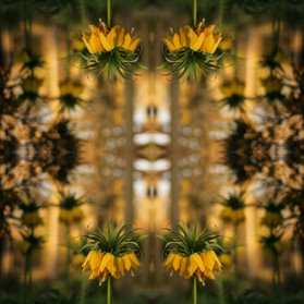 Goldenscope.jpg