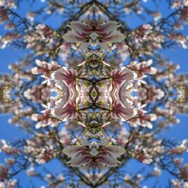 Magnoliascope II.jpg