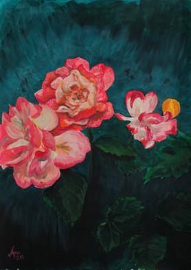 Rose in Brockwell Park
