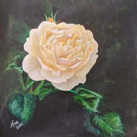 White Rose of Brockwell Park.jpg