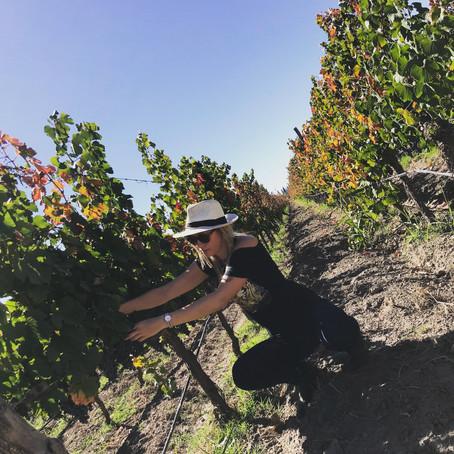 The Traveling Somm on Organic Farming