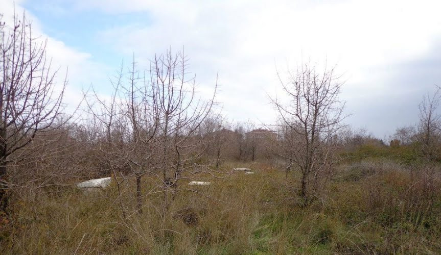 Galipoli cemetery.