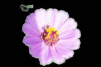 flower in sky.png