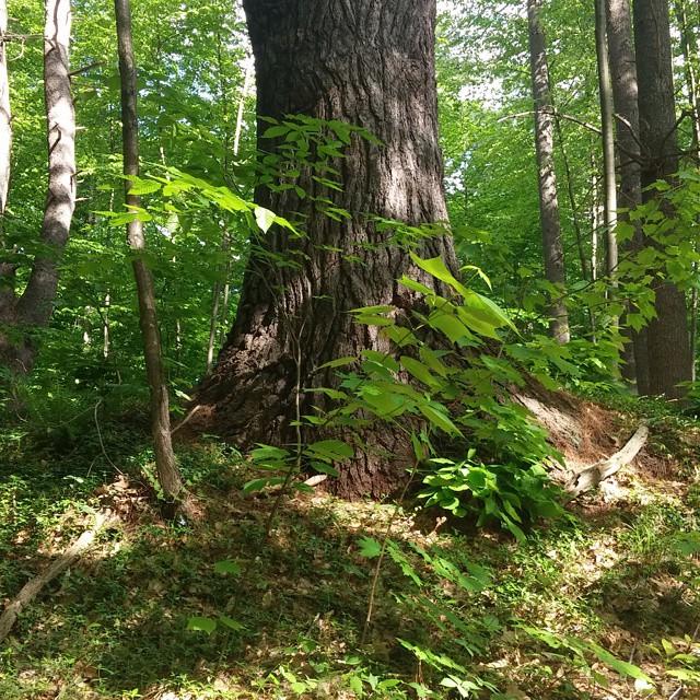 Instagram - #natureisawesome #Vermont #Newhampshire #Massachusetts #newengland #