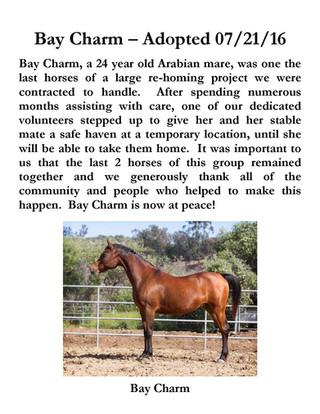 Bay Charm.jpg