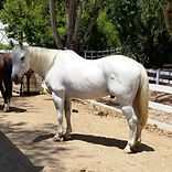 Luke Adoptable Horse