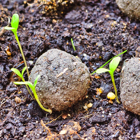 seed bomb.jpg