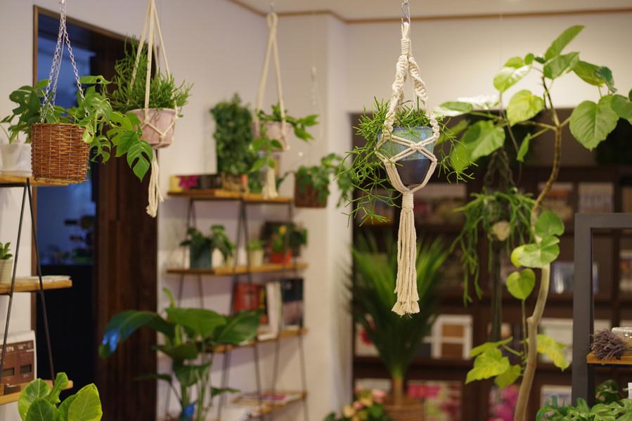 インドアグリーン 観葉植物