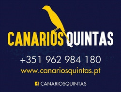 Canarios Quintas