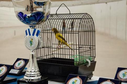 Campeón Mundialito 2010 Benidorm
