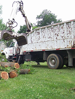 Tree Service_1_edited.png