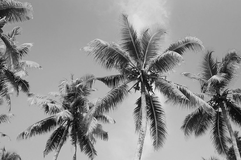 Palm%20Trees_edited.jpg