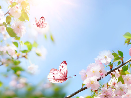 SPRING: A TIME FOR REBIRTH AND RENEW YOUR SKIN