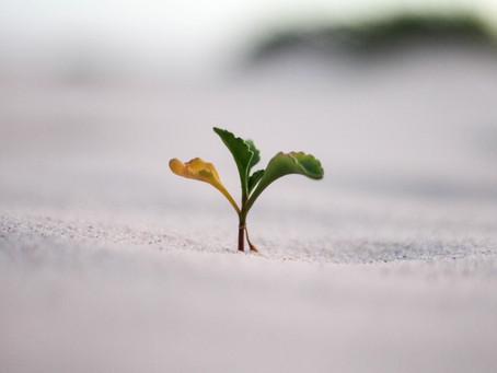 La semilla y el propósito de vida