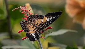 20200825_Papillons_066b_MAX.jpg