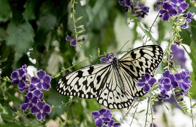 20200825_Papillons_103b_MAX.jpg