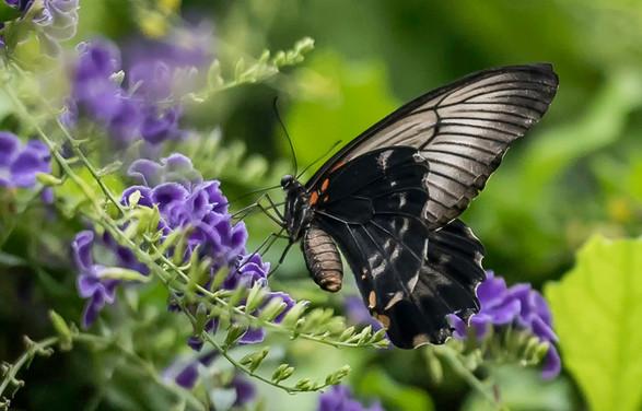 20200825_Papillons_130b_MAX.jpg