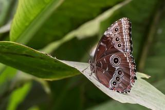 20200825_Papillons_051b_MAX.jpg