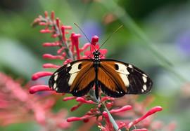 20200825_Papillons_056b_MAX.jpg