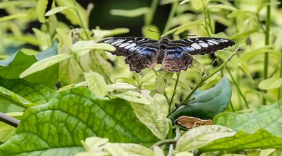 20200825_Papillons_016b_MAX.jpg